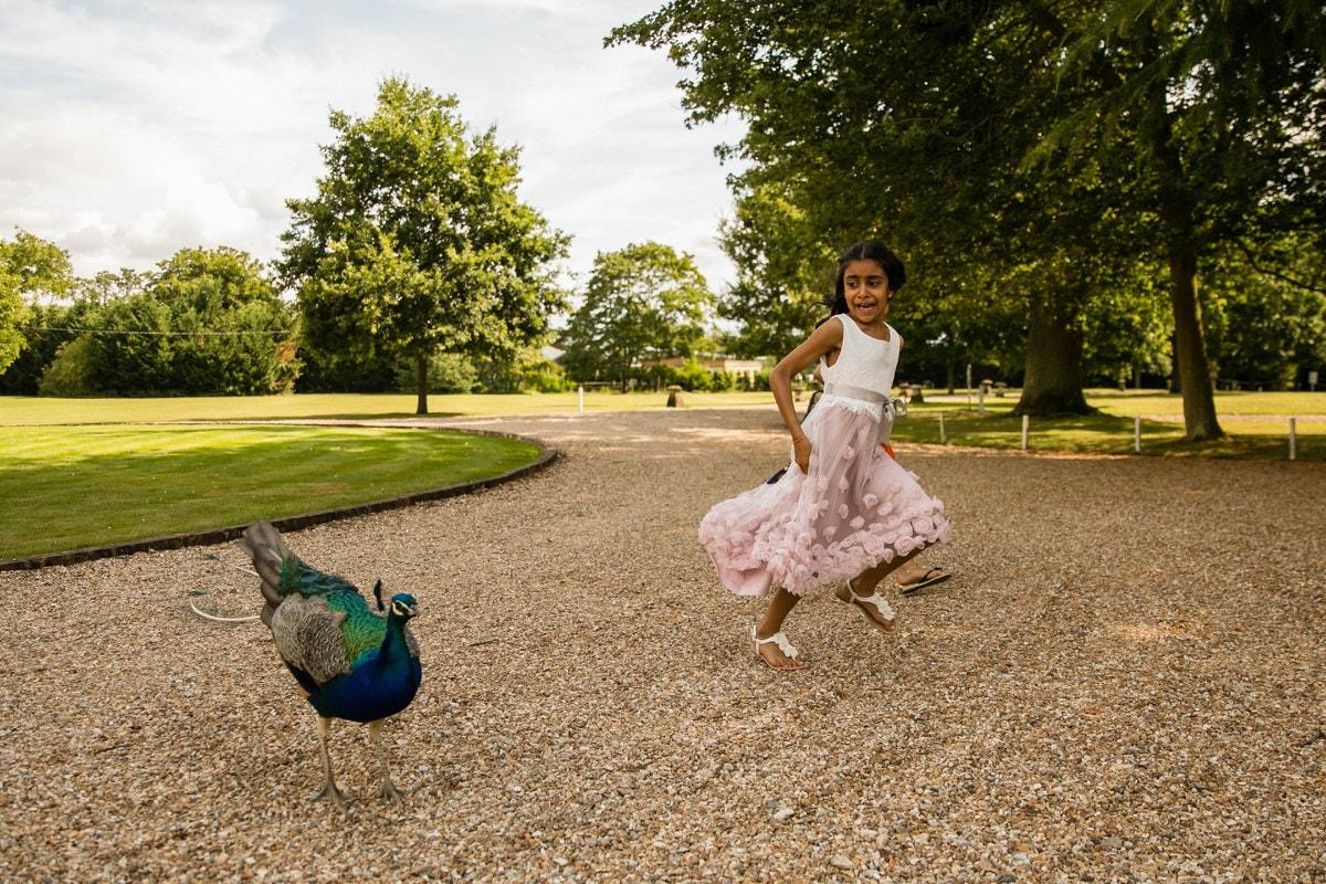 Peacock at Northbrook Park