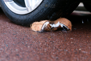 Coconut being crushed by car
